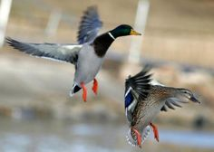 $30 Million Federal Investment in Waterfowl Hunting Programs | Field & Stream