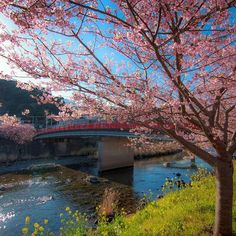 【zaru_kosaka】さんのInstagramをピンしています。 《編集し直してふんわりな感じで♪ ーーーーーーーーーーーーーーーーーーーーーー  photo @zaru_kosaka #桜 #河津桜 #cherryblossom #special_spot_ #insta_world_photo_ #奥行き同盟 #japan_daytime_view #japan #spring #springday #team_jp_ #followme #like4like #loves_nippon #tokyocameraclub #東京カメラ部 #sakura #icu_japan #pkt_japan #instagramjapan #canon #canon_official #wu_japan #instapic #follow4like #写真撮ってる人と繋がりたい #写真好きな人と繋がりたい #ファインダー越しの私の世界 #follow4follow》