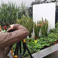... greenery photo shooting for us! @bluepoinfirenze #bpf #bluepoinfirenze #instaglamour #followus #love #seguiteci #bigiotteria #collection #stile #accessorizes #flowers #bijouxdellanno #mipiace #style #argento #like #gioielli #likeit #tendenza #moda #cliccate #instafashion #beautiful #fashion #jewels #glamour #tag #likes #tagforlikes #newcollection #novità #firenzebijoux #accessorimoda #cool #bijoux #accessorifashion #new #accessori #musthave #shooting #green