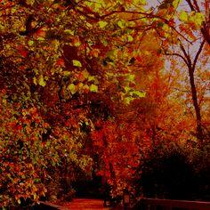 Fall bridge...