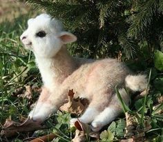 a baby alpaca. this thing doesn't even look real!  To bad they grow up and look so strange.