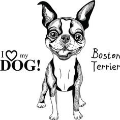 boston terriers drawing clip art vector images illustrations - Boston Terrier Coloring Page
