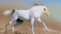 Heagle - 15 New Animal Species Bred in Photoshop Bizarre Animals, Funny Animals, Beautiful Horses, Animals Beautiful, Photoshopped Animals, Animal Mashups, Horse Wallpaper, Photo Wallpaper, Funny Photoshop