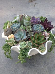 Very clever. Use a shell for your succulent garden. Put in on your patio or even inside on your table as a centerpiece.