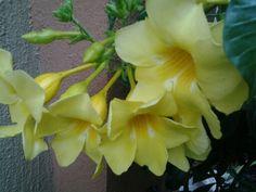 Bellas como el sol, mi jardin