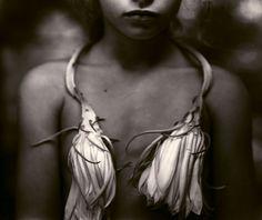 Sally Mann (American, b. 1951)Night Blooming Cereus, 1988©Sally Mann/Courtesy of Edwynn Houk Gallery