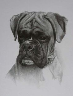 Julie Rhodes - Boxer dog portrait ....She has captured the boxer character perfectly