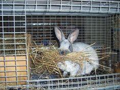 Nest Box Info - Brick House Acres Rabbitry Rabbit Nesting Box, Nesting Boxes, Rabbit Colors, Nest Box, Genetics, Rabbits, Bunnies, Brick, Board