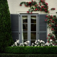 Boxwood hedge with roses. White on Green. Simple and Elegant.