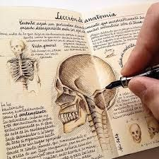anatomical moleskinerie
