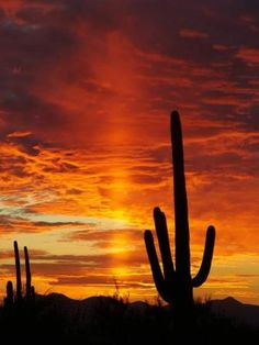 Arizona Sunset in the desert