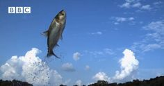 3 Fish Fish, Pets, Funny, Animals, Animales, Animaux, Funny Parenting, Animal, Animais