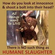 No such thing as humane slaughter!