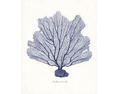 Costa vidrio de mar decoración E. Haeckel fantasía Mar Coral
