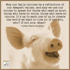 vegan quotes compassion - Google Search