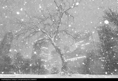 Central Park, New york, Feb 2016 Pt...? - stock photo
