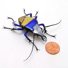 Wesley Fleming--Patchwork Jewel Tiger Beetle