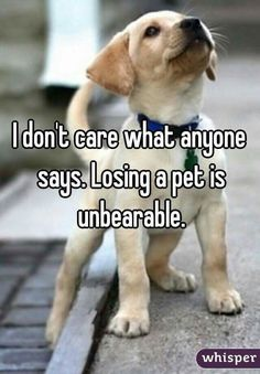 Losing a pet is unbearable!