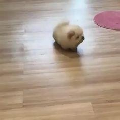 Cute:v