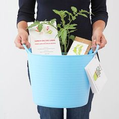 How to build a tomato tub