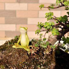 Top Collection Miniature Fairy Garden and Terrarium Yoga Frog Meditation Lotus Pose Statue Garden Line, Frog Statues, Lotus Pose, Garden Terrarium, Terrariums, Meditation Gifts, Fairy Garden Supplies, Garden Items, Miniature Fairy Gardens