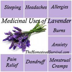 The Homestead Survival | Lavender – Natural Remedies  and Tips | http://thehomesteadsurvival.com - Homesteading & Essential Oil