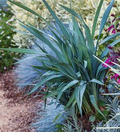 Southern California: 5 Plants for Spring Color | Sunset Western Garden Collection