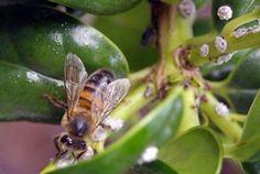 flores que as abelhas gostam - Pesquisa Google