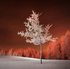 Frozen! #nature #ice #winter