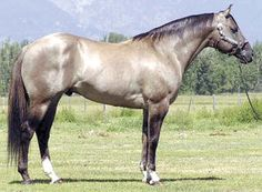 images of grulla horses - Bing Images......Celebrity Concerto, reg. Quater Horse stallion.