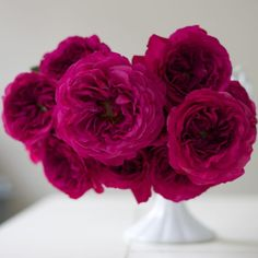 Flirty Fleurs Pink Garden Roses Study with Alexandra Farms - Princess Kishi Magenta Garden Rose