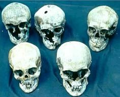 Romanov skulls : Olga, Tatiana, Anastasia, Nicholas and Alix.