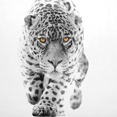 Lion Sculpture, Van, Statue, Black And White, Animales, Minimalist Chic, Black And White Pictures, Monochrome, Vans