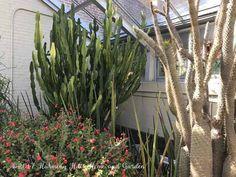 Rawlings Conservatory in Baltimore, MD - inside the Desert House - www.HarmonyHillsHomeandGarden.com