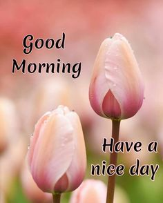 Good Morning Picture, Good Morning Good Night, Morning Pictures, Good Morning Images, Good Day, Good Night I Love You, Good Morning Beautiful Quotes, Good Morning Quotes, Good Morning Greeting Cards