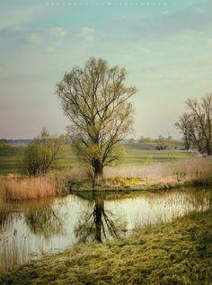 Bory Tucholskie, Polska