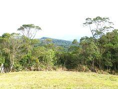 Mata Atlântica. Árvores como o manacá e a araucária se destacam  (Foto: Reprodução/ TV TEM)