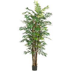 7 Foot Bamboo Palm Tree *Beautiful* | eBay
