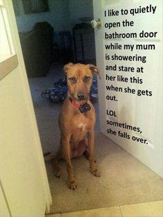 dog shaming funny pictures---Blaze, our boxer did this last night.   I think he was wanting a shower too.