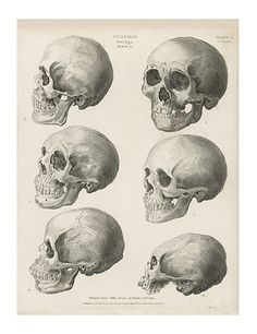 cranium, from The Cyclopaedia; or, Universal Dictionary of Arts, Sciences and Literature, by Abraham Rees, ca. 1812-20