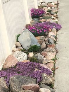 Side yard Rock garden with Creeping thyme, early blue violets, fire witch, pussy toes, and succulents. Early blue violets are great for growing in rock crevices. Diy Garden, Dream Garden, Garden Projects, Garden Art, Plants For Rock Garden, Succulent Rock Garden, Garden Beds, Flowers Garden, Herb Garden