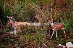 Wildlife Safari in Jim Corbett National Park, India