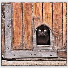 #myinstagram365proyect día023 no me mires así, he dicho que hoy no salgo! #menaza #palencia #gato #gatonegro #cat #blackcat #igerscyl #igerspalencia