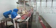 poultry processing equipment viscera trough