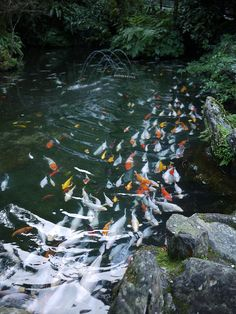 Pinterest the world s catalog of ideas for Koi pond volume calculator