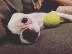 I'm not tired- I promise.  by piperbea_theboston