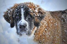 Dogs warm!