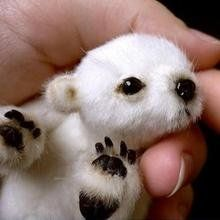 """According to the caption: Usually listed as """"brand new baby polar bear"""" or """"cute polar bear. The truth: It's not a real bear. It's a stuffed bear that you can buy a pattern to make on Etsy. Found in Baby polar bear. Newborn Animals, Cute Baby Animals, Animals And Pets, Funny Animals, Wild Animals, Animals Planet, Animals Images, Arctic Animals, Animal Memes"""