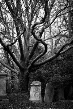 Black and white cemetery photography, alternative goth punk rock metal horror dark photographer, London, uk Tower Hamlets, Cemetery Headstones, Season Of The Witch, Southern Gothic, Catacombs, Dark Souls, Wall Collage, Black And White Photography, Old Things