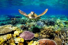 Help save the Great Barrier Reef. http://fightforthereef.org.au